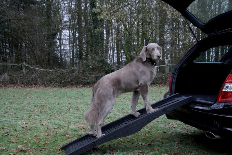 hond op loopplank