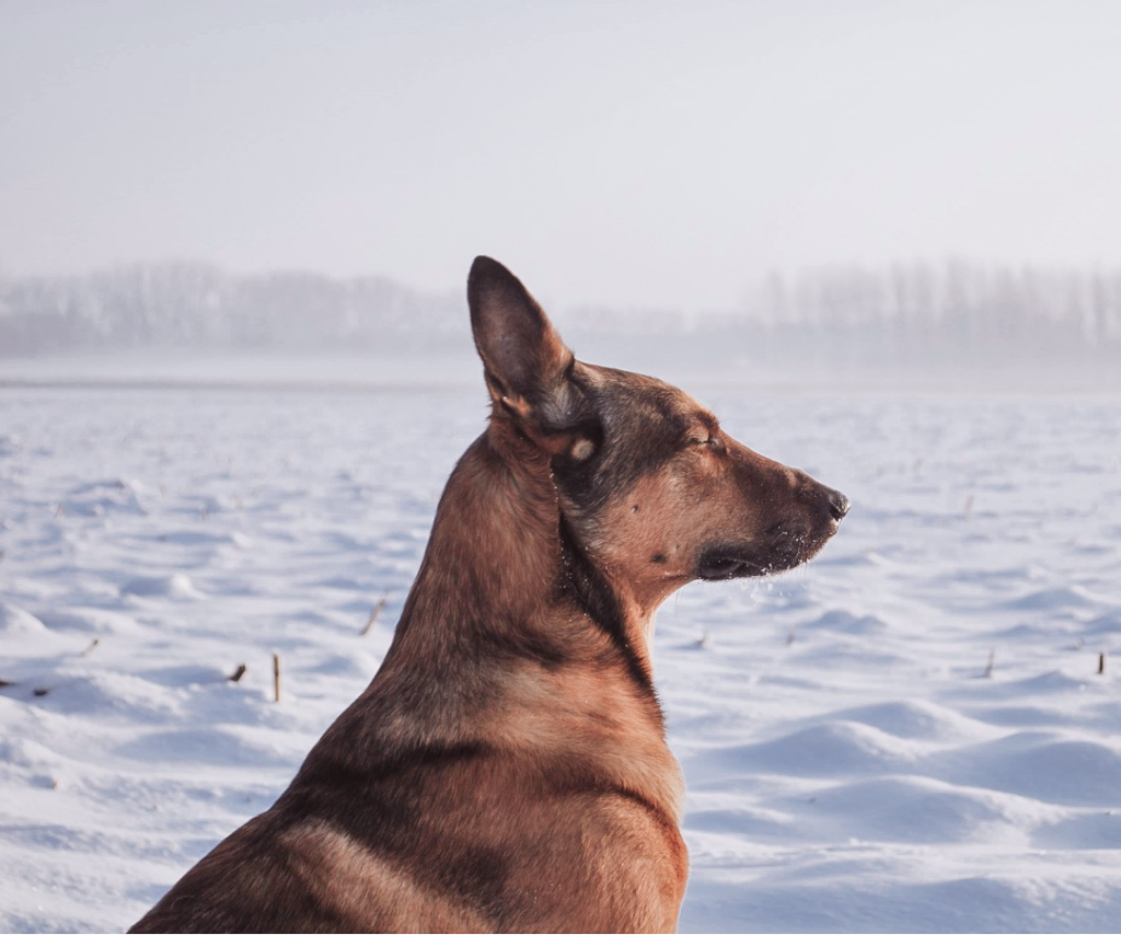hond in de winter
